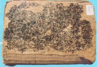 Музей қорындағы «Альфикх-уль Акбар» кітабы — аса маңызды құндылықтардың бірі